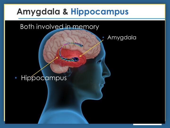 explaining the role of amygdala in recognizing emotion .