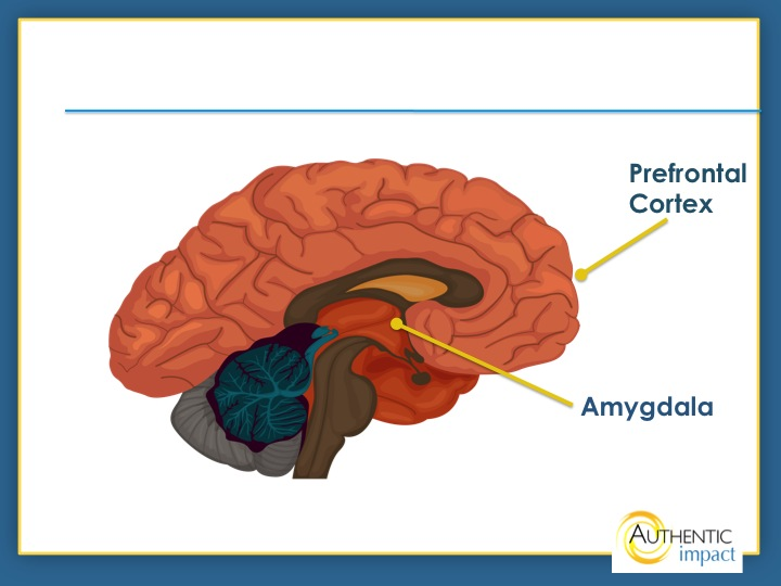 how the amygdalas emotional function can affect How the amygdala affects anxiety the amygdala is a set of small, almond-shaped clusters of nuclei near the base of your brain these almond-shaped clusters are the most active when you experience fear or aggression, due to the fact that they are responsible for triggering the body's fight or flight response.